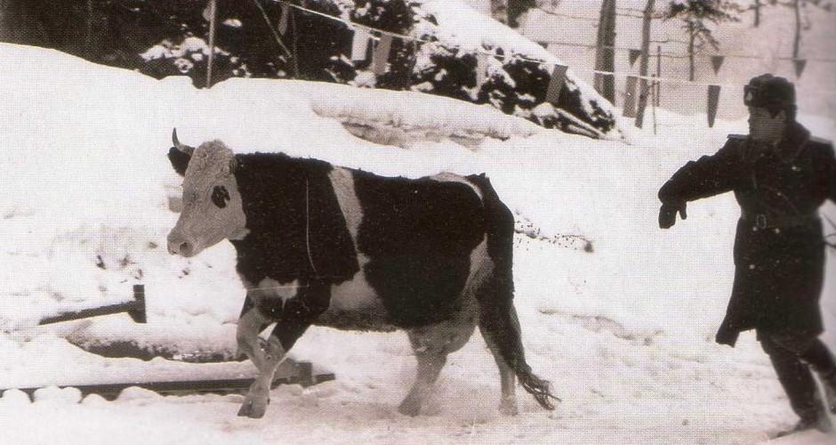 Lehm ja miilits